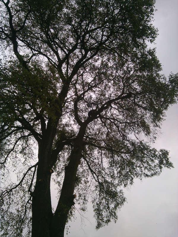 Ścinanie drzew - Gaj