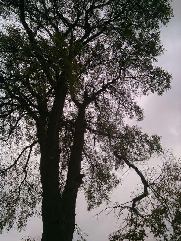 Gaj - ścinanie drzew