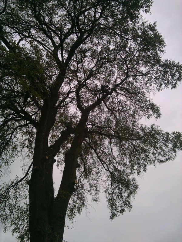 Gaj- wycinka drzew