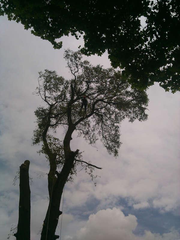 Cięcie drzewa kawałek po kawałku