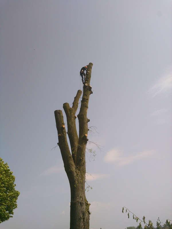 Wycinanie drzewa kawałek po kawałku