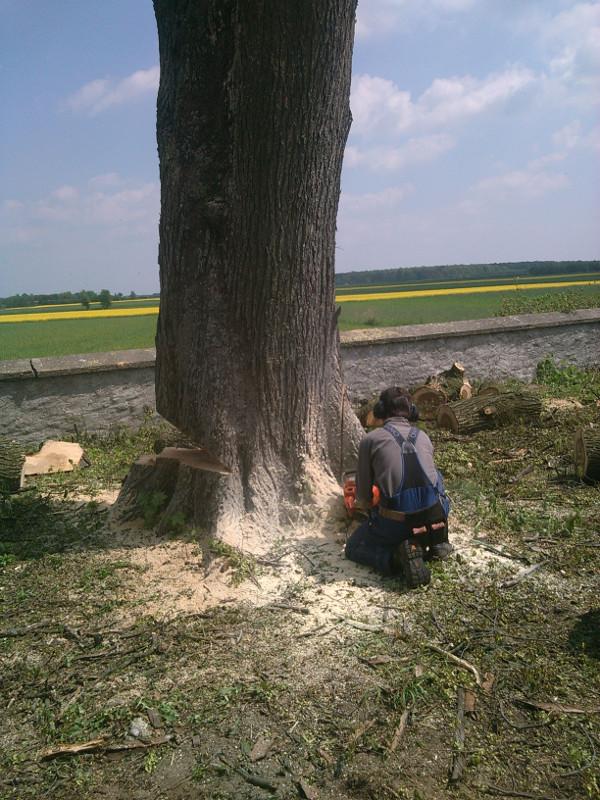 Wycinanie drzewa - Gaj