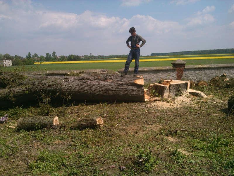 Wycięte drzewo