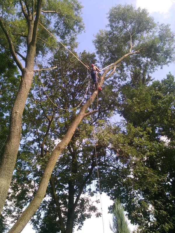 Wycinanie drzewa - technika alpinistyczna