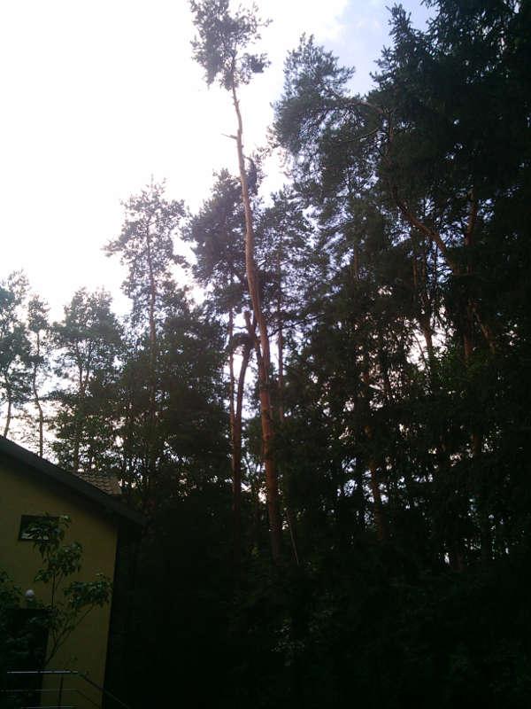 Sosna - wycięcie drzewa Radomsko
