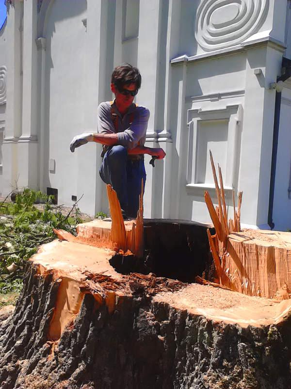 Jesion - wycinka drzew Częstochowa