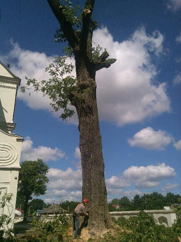 Jesion - ścinanie drzew Częstochowa