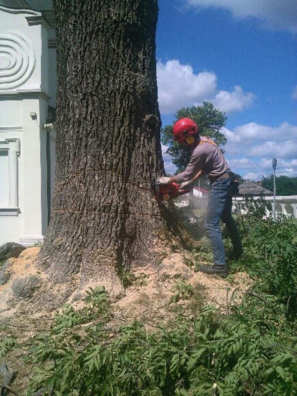 Jesion - wycięcie drzewa Częstochowa