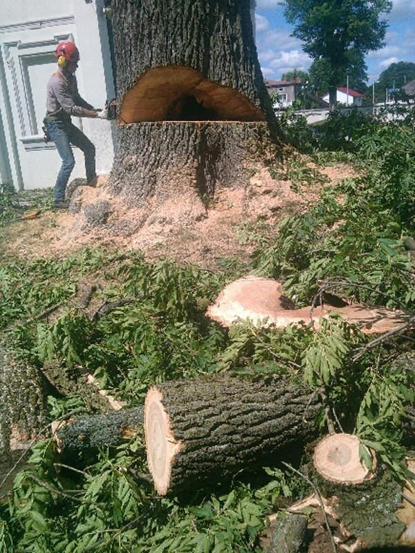 Wycięcie drzewa Jesion - Częstochowa