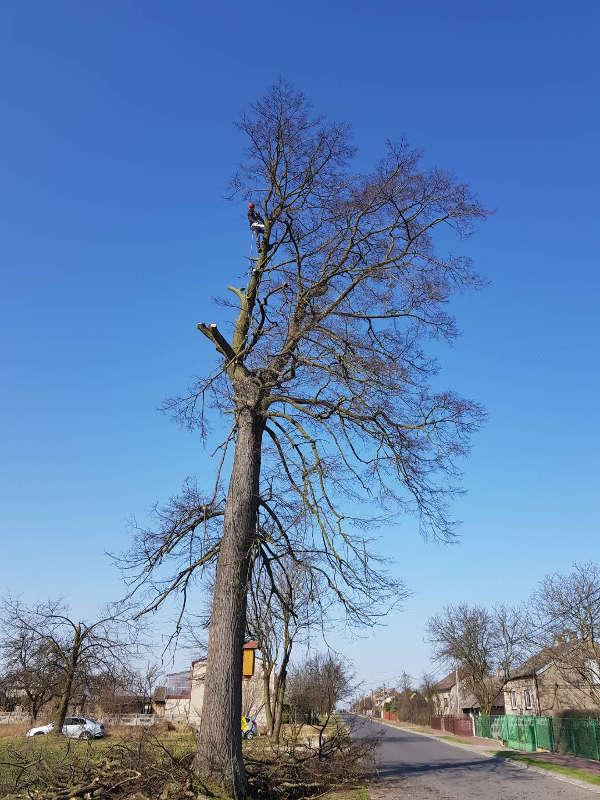 Technika alpinistyczna - wycinanie drzewa