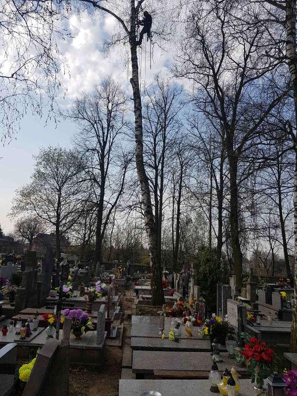 Wycinanie Brzozy cmentarz
